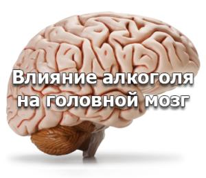 Влияние алкогольных напитков на мозги