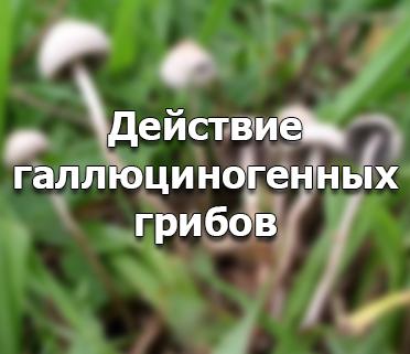 Воздействие галлюциногенных грибов